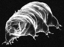 080908-tardigrade-hmed315p