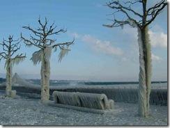 pohon-beku